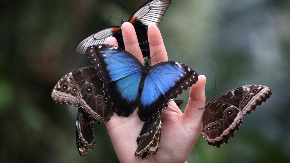 _65236539_butterflies6